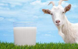 Можно ли пить козье молоко при грудном вскармливании?
