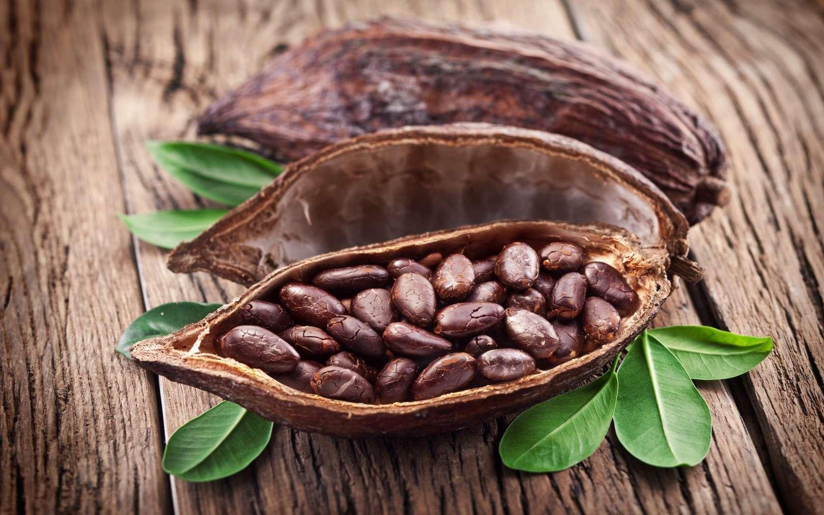 Из чего делают какао