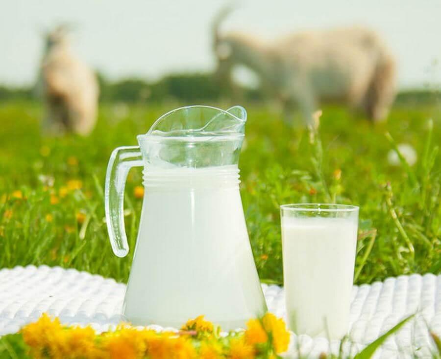 выбор молока